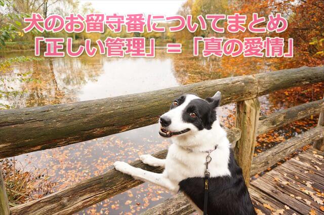 犬の留守番